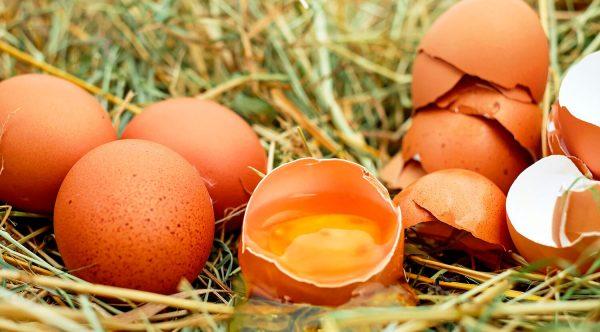 huevos y cáscaras morenos